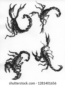 scorpions insects drawing