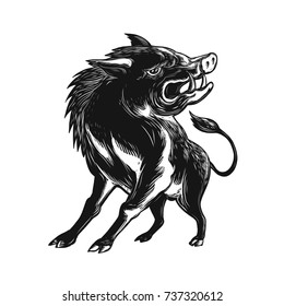 Scratchboard style illustration of an angry wild hog, feral pig, wild boar or razorback roaring viewed from low angle in front done on scraperboard on isolated background.
