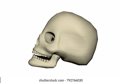 scull bones 3D rendering
