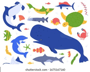 Sea animals species. Ocean animals in their natural habitat. Cute whale, dolphin, shark and turtle  illustration set. Undersea world pack. Water plants, seaweed hammer fish isolated on white