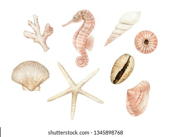 Sea gifts, seahorse, seashell, starfish, watercolor drawing