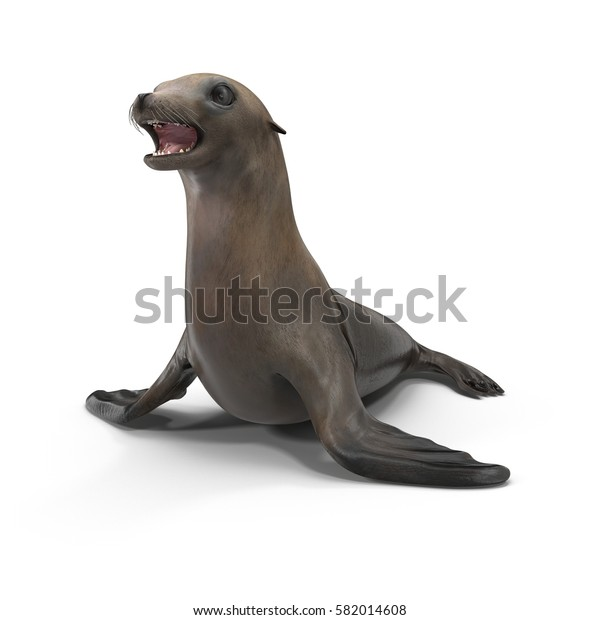 Sea Lion on white. 3D illustration