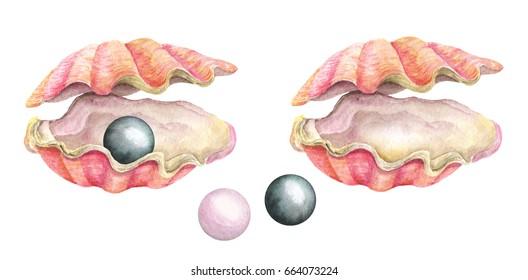 Sea shells with pearls. Watercolor illustration. Summer exotic symbol. Hand drawn illustration