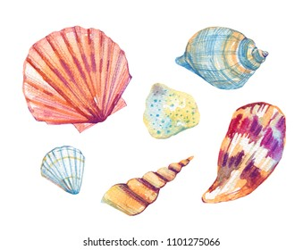 Sea shells watercolor hand drawn stylized illustration set isolated on white background