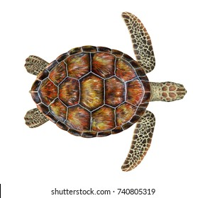 Sea Turtle Isolated. 3D rendering