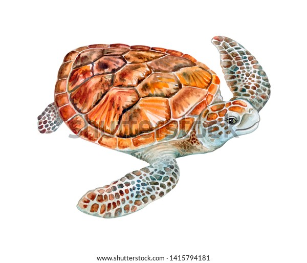 Sea turtle isolated on white background. Watercolor. Illustration.  Template. Close-up. Clip art. Hand drawn. Clip art.