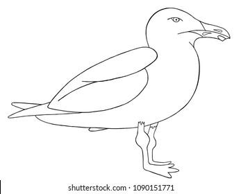 seagull standing line illustration