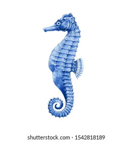 Sea-horse bright watercolor illustration. Salt water exotic sea horse fish. Hand drawn small tropical seahorse fish - aquarium colorful creature, isolated on white background.