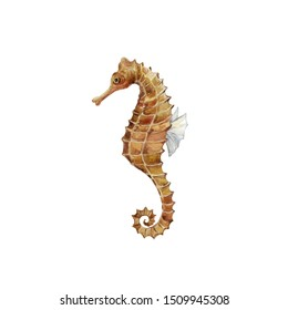 Seahorse on the white background. Watercolor graphic. Underwater world.