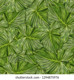 Seamless background with leaves of exotic plant. Jungle.