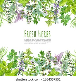 Seamless borders with watercolor kitchen herbs and plants, hand drawn watercolour illustration.