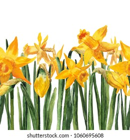 Seamless bottom border with watercolor yellow narcissus on white background