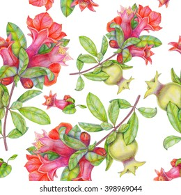 Seamless colored pencils pattern with branch with leaves, flowers and fruit pomegranate on white background. Hand drawing botanical illustration.