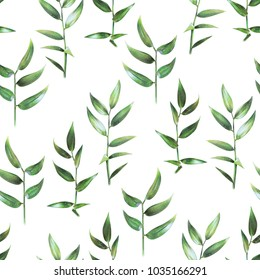 Seamless floral pattern with green leaves of ruscus on white. Spring plants. Botanical natural background drawn by hand with colored pencil