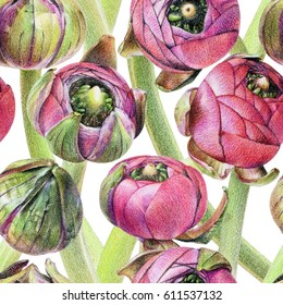 Seamless floral pattern with purple buttercup buds on white. Spring flowers. Botanical natural background drawn by hand with colored pencil