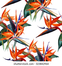 Seamless floral pattern. Strelitzia on a white background.Watercolor painting.