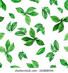 seamless foliage pattern. detailed botanical illustrations of exotic leaves: mint and ficus.