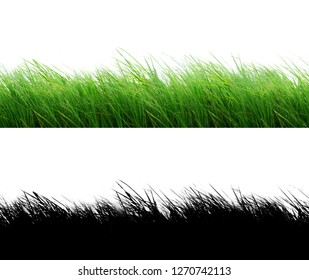 Seamless isolated green grass on white background. This grass image easy using with mask.