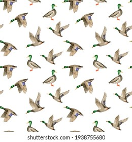 seamless pattern with birds wild ducks drake on white background, watercolor illustration hand painted