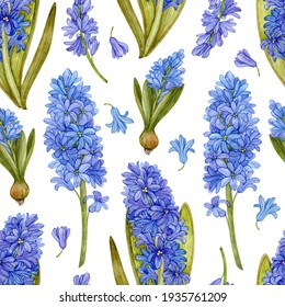 Seamless pattern with blue watercolor hyacinths on a white background. Pattern with spring bright flowers.