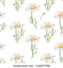 Seamless pattern with camomile flowers and leaves, watercolour raster illustration on white background. Seamless watercolor pattern with daisy, camomile flowers, leaves and buds on white background