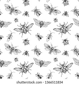 Seamless pattern. Engraving insects Isolated on white background. Beetle with a skul and others. Hand drawn illustration. Black ink. Great for Halloween and more.