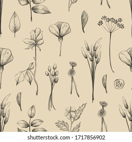 Seamless pattern with flowers and plants, summer herbarium, pencil illustrations, vintage background
