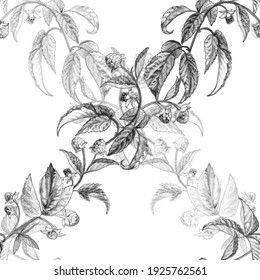 Seamless pattern from the graphic image of branches and berries of raspberries. Pencil, monochrome grid. Designed for printing, textile, wallpaper, background, packaging.