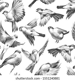 Seamless pattern of hand draw winter flying birds isolated on white background. Manual graphics sketch. Monochrome illustration of titmouse, bullfinch. Simple pencil, ink, art. Design for wallpaper.