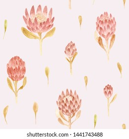 Seamless pattern. Hand drawn watercolor protea flower. Hand painted illustration on pink background. Flowers design for fabric, textile, print, cloth, wallpaper, wrapping paper, wedding decor floral.