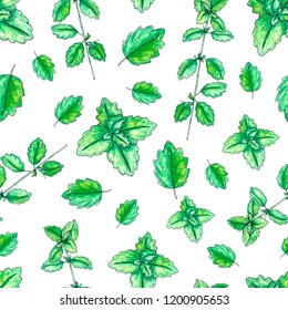 Seamless pattern with hand painted watercolor melissa isolated on white. Repeating background with herbs for textile, packaging or scrapbooking