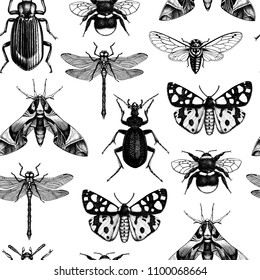 Seamless pattern with high detailed insects Illustrations. Hand drawn sketches of bumblebee, dragonfly, butterflies, beetles and cicada. Vintage background with entomological drawings.