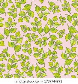 Seamless pattern of leaves. Watercolor green leafy twigs isolated on poudre pink. Hand drawn round pointed foliage. Simple sketch or doodle style. Perfect for wrapping paper, textile and backdrop.