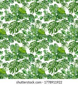 Seamless pattern with monstera plants and variegated monstera leaves on a white background. Endless pattern can be used for wallpaper, fabric, upholstery