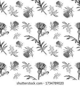 Seamless pattern for postcards black and white from leaves and flowers of a thistle on a white background. Minimalistic design for halloween, fabric and event design. Witch flower. Funeral decoration