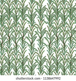 Seamless pattern with rosemary twigs. Botanical modern illustration hand painted in watercolor. Perfect for wallpapers, web page backgrounds, surface textures, textile
