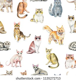Seamless pattern with ten different breeds of cats isolated on white background. Watercolor pencils hand drawn illustration