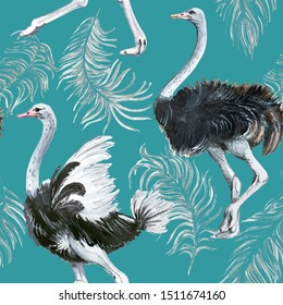 Seamless pattern of watercolor birds ostriches and ostrich fluffy feathers.