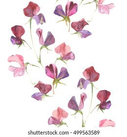 Seamless pattern with  watercolor sweet pea on a white background.