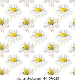 Seamless pattern with wildflowers. Chamomile flowers on white background.