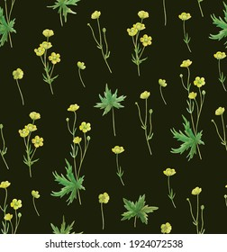 Seamless pattern with yellow meadow buttercup flowers. Realistic botanical illustration.