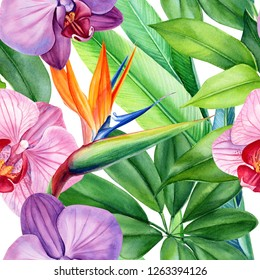 seamless patterns of tropical flowers orchids, strelitzia and green leaves, monstera on an isolated white background, watercolor illustration, flora design