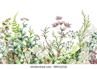 seamless rim. Border with Herbs and wild flowers, leaves. Botanical Illustration Colorful illustration on white background. watercolor spring composition