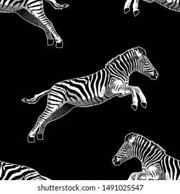 Seamless zebra print, jumping, animal pattern on black background. -Ilustration.