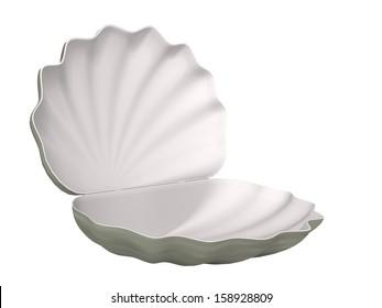 seashell on a white background
