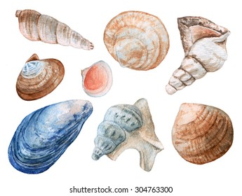 Seashells. Cockleshells. Bottom of the sea.  Watercolor illustration.