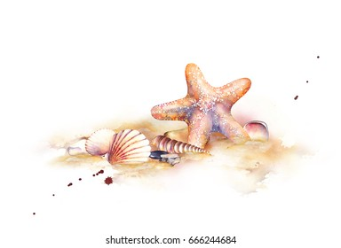 Seashells on the beach. Watercolor illustration
