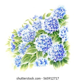The season of Hydrangeas.