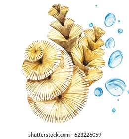 Seaweed sea life object isolated on white background. Watercolor hand drawn painted illustration. Underwater watercolor background illustration.
