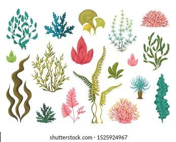 Seaweeds. Underwater ocean plants, sea coral elements, hand drawn ocean flourish algae, cartoon decorative drawing.  draw aquariums seaweed set